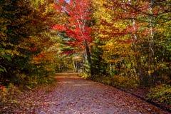 Vista degli alberi variopinti durante la stagione di autunno Fotografie Stock Libere da Diritti