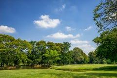 Vista degli alberi verdi nel parco della città Immagine Stock Libera da Diritti