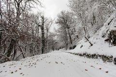 Vista degli autisti di automobile attraverso la foresta di nevicata Fotografie Stock