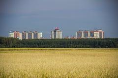 Vista degli edifici residenziali distanti dal giacimento di grano fotografia stock libera da diritti