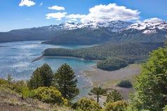 Vista dei araucarias, del lago e delle montagne coperti di neve Fotografie Stock