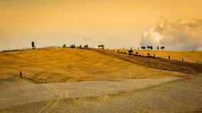 Vista dei campi arati vuoti nella regione toscana San Quirico d O Immagini Stock Libere da Diritti