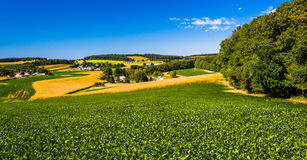 Vista dei campi dell'azienda agricola e di Rolling Hills nella contea di York rurale, Penn immagini stock
