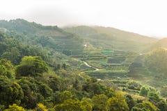 Vista dei campi verdi Immagini Stock Libere da Diritti