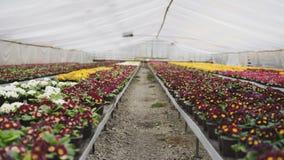 Vista dei generi colourful differenti di fiori in serra 4K video d archivio