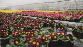 Vista dei generi colourful differenti di fiori in serra 4K stock footage