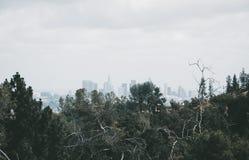 Vista dei grattacieli di Los Angeles Sito di osservazione in Griffith Park Fotografia Stock Libera da Diritti