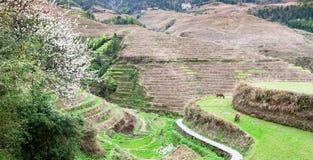 vista dei motivi vicino al villaggio di Dazhai in paese Immagine Stock