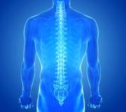 Vista dei raggi x della spina dorsale umana Immagine Stock Libera da Diritti
