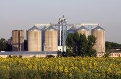 Vista dei sili di granulo Fotografie Stock Libere da Diritti