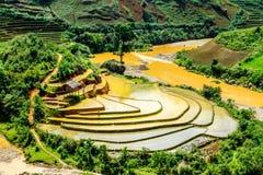 Vista dei terrazzi del rie degli agricoltori etnici Fotografie Stock Libere da Diritti