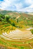 Vista dei terrazzi del rie degli agricoltori etnici Fotografia Stock Libera da Diritti