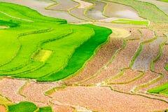Vista dei terrazzi del rie degli agricoltori etnici Immagine Stock Libera da Diritti
