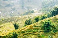 Vista dei terrazzi del riso agli altopiani del distretto di PA del Sa nel Vietnam Immagini Stock