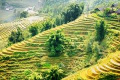 Vista dei terrazzi del riso agli altopiani Distretto di PA del Sa nel Vietnam Immagini Stock Libere da Diritti