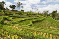 Vista dei terrazzi del riso in Bali con lo scorrimento dell'acqua Fotografie Stock