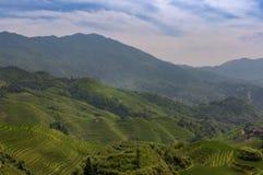 Vista dei terrazzi del riso di Longsheng vicino al del villaggio di Dazhai nella provincia del Guangxi, in Cina, con un lavoro fe Fotografie Stock Libere da Diritti