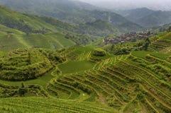 Vista dei terrazzi del riso di Longsheng vicino al del villaggio di Dazhai nella provincia del Guangxi, in Cina, con un lavoro fe Immagini Stock Libere da Diritti