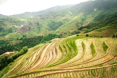 Vista dei terrazzi del riso del Longji di Longsheng a Guilin, Cina fotografia stock libera da diritti