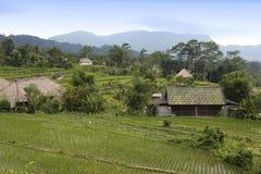 Vista dei terrazzi del riso nel giorno nuvoloso l'indonesia bali Fotografia Stock