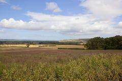 Vista dei wolds di Yorkshire Fotografia Stock Libera da Diritti