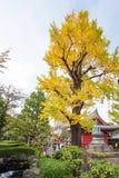 Vista del árbol del otoño en el parque, Tokio, Japón vertical Fotografía de archivo libre de regalías