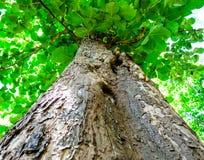 Vista del árbol tropical Imagen de archivo libre de regalías