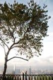 Vista del árbol y de los paisajes urbanos de Hong-Kong Imagen de archivo libre de regalías