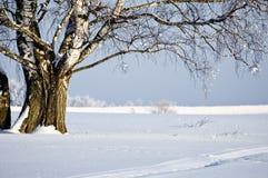 Vista del abedul en el día asoleado del invierno Fotografía de archivo