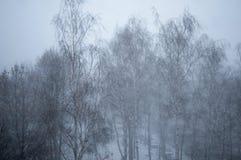 Vista del abedul hermoso del invierno Imagen de archivo libre de regalías