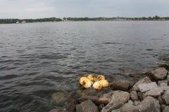 vista del agua, de las rocas y de los flotadores en el golfo de Finlandia de Petersburgo foto de archivo