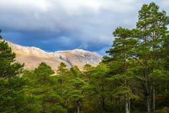 Vista del bosque caledonio postglacial en la reserva de naturaleza de Beinn Eighe cerca de Kinlochleven en las montañas de Escoci Imagen de archivo