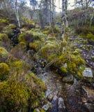 Vista del bosque caledonio postglacial en la reserva de naturaleza de Beinn Eighe cerca de Kinlochleven en las montañas de Escoci Fotografía de archivo