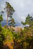 Vista del bosque caledonio postglacial en la reserva de naturaleza de Beinn Eighe cerca de Kinlochleven en las montañas de Escoci Foto de archivo