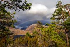 Vista del bosque caledonio postglacial en la reserva de naturaleza de Beinn Eighe cerca de Kinlochleven en las montañas de Escoci Imagenes de archivo