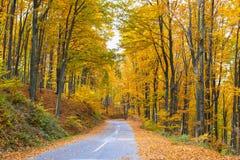 Vista del bosque de hojas caducas Imagenes de archivo