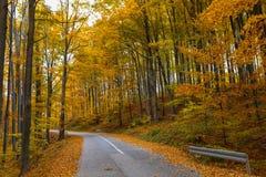 Vista del bosque de hojas caducas Foto de archivo libre de regalías