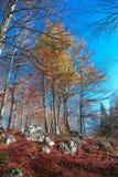 Vista del bosque de hojas caducas Imagen de archivo libre de regalías
