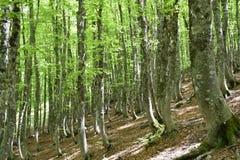 vista del bosque de la haya iluminada por el sol foto de archivo