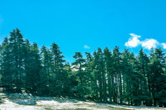 Vista del bosque del árbol de pino en invierno Foto de archivo