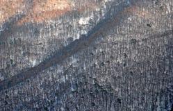 Vista del bosque del invierno imagen de archivo libre de regalías