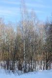 Vista del bosque del invierno en día soleado Foto de archivo libre de regalías