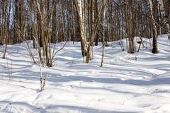 Vista del bosque del invierno en día soleado Foto de archivo