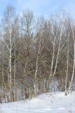 Vista del bosque del invierno en día soleado Imagenes de archivo