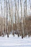 Vista del bosque del invierno en día soleado Fotos de archivo libres de regalías