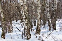 Vista del bosque del invierno en día soleado Fotografía de archivo