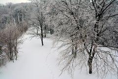Vista del bosque nevoso en el top foto de archivo