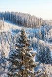 Vista del bosque spruce en el invierno fotografía de archivo libre de regalías