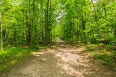 vista del bosque verde fresco natural con el rastro, trayectoria, paisaje en las colinas de Ontario Halton Imagenes de archivo