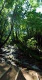 Vista del bosque y del río Foto de archivo